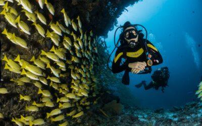 Um espetáculo até debaixo d'água